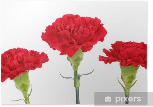 Plakat Trzy Gozdziki Kwiaty Pixers Zyjemy By Zmieniac