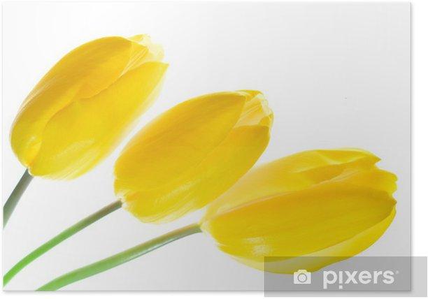 Plakat Tulip - Kwiaty