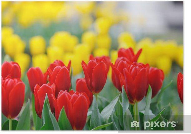 Plakát Tulip - Témata