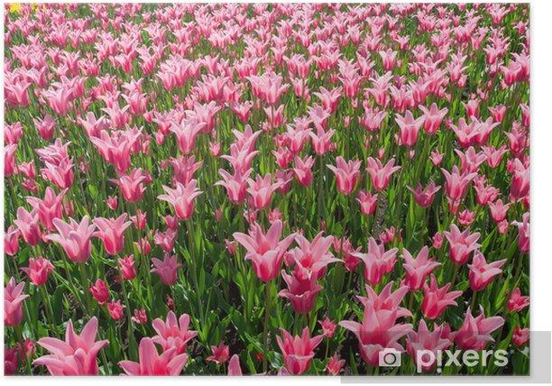Plakat Tulipan kwiaty - Tematy
