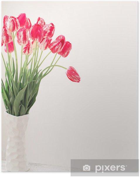 Plakát Tulipány na bílém pozadí - Květiny