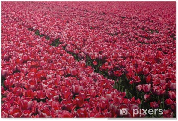 Plakát Tulipány pozadí - Květiny