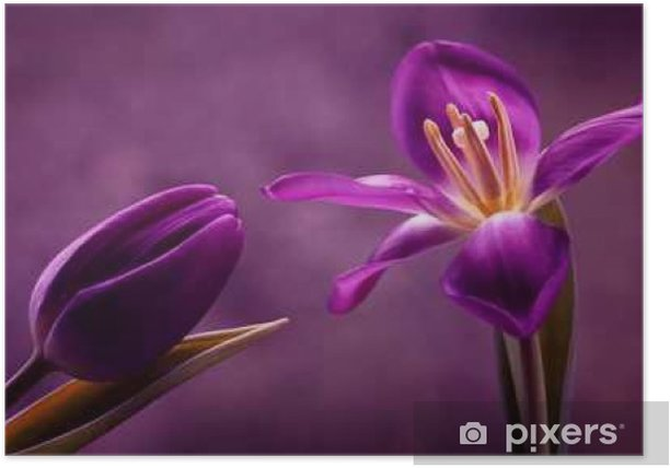 Plakat Tulipany - Rośliny i kwiaty