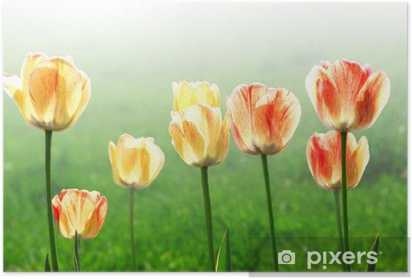 Plakát Tulips - Květiny