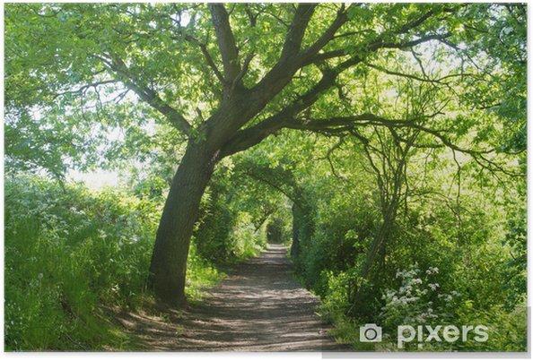 Plakat Tunneled ścieżka między drzewami - Natura i dzicz