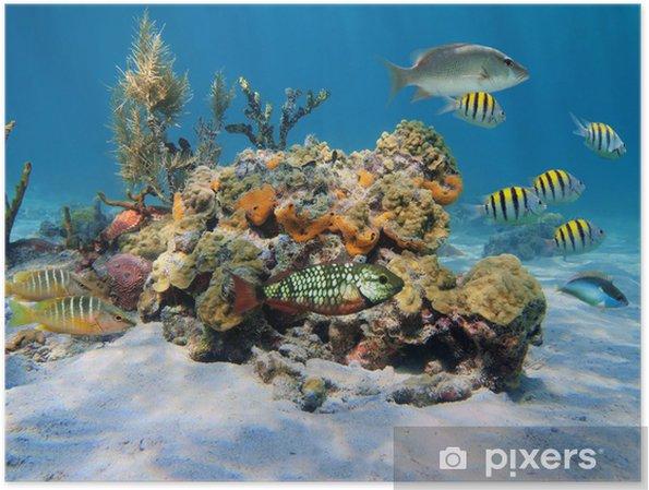 Plakát Tvrdé korály v moři - Ryby