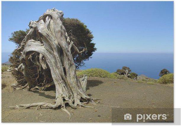 Plakat Twisted Drzewo - Drzewa