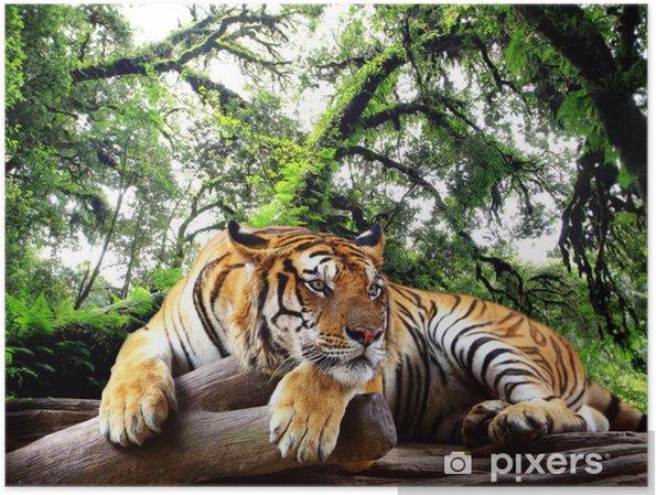Plakat Tygrys szuka coś na skale w tropikalnych lasów zimozielonych - iStaging
