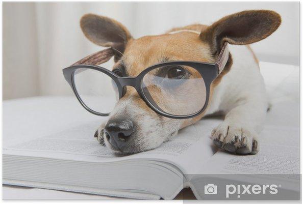 97c73377509 Plakát Unavení čtení knihy studie pes • Pixers® • Žijeme pro změnu