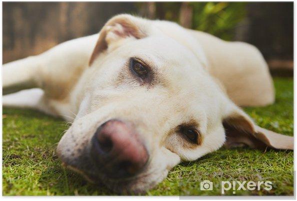 cc09a6da5d5 Plakát Unavený pes • Pixers® • Žijeme pro změnu