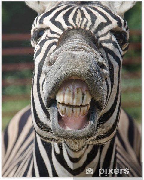 Plakat Uśmiech i zęby zebra - Tematy