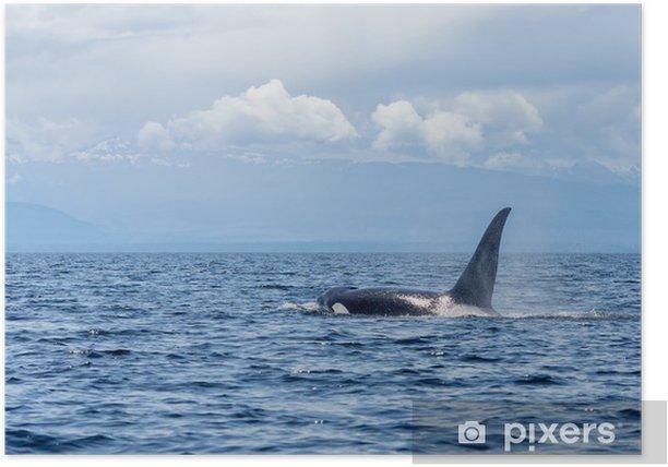 Plakát Velryba orca nebo kosatka - Vodní a mořský život