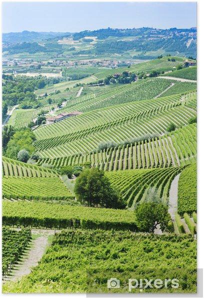Plakat Vineyars pobliżu Barbaresco, Piemont, Włochy - Europa