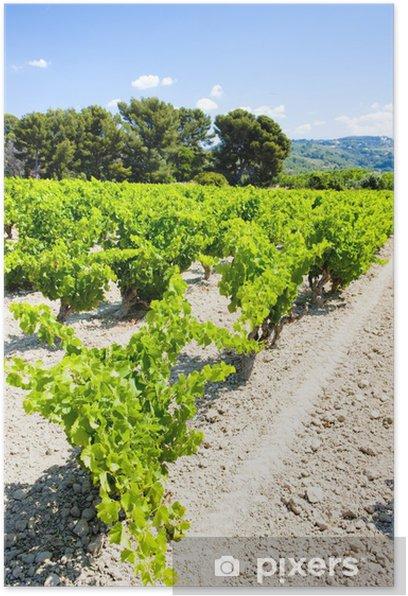 Plakát Vinice nedaleko Bandol, Provence, Francie - Evropa