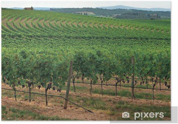 Plakát Vinice přes kopce v Chianti, Itálie. v Chianti, Itálie. - Evropa