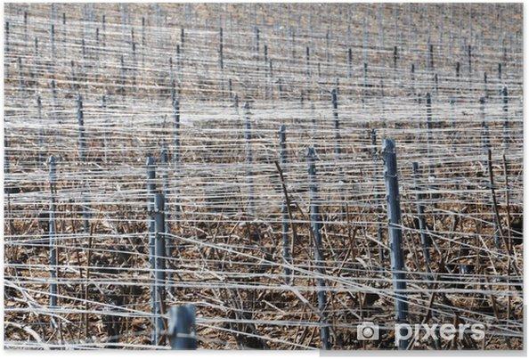 Plakát Vinice v zimě - Zemědělství