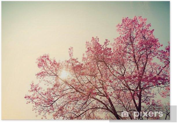 Plakat Vintage wiśni - sakura kwiat. charakter tła (filtr retro efekt kolorystyczny) - Rośliny i kwiaty