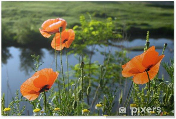 Plakát Vlčí máky (5) - Květiny