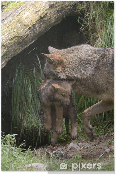 Plakát Vlčice se svými mláďaty - Savci