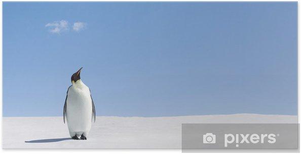 Plakát Vyhledávám - Ptáci