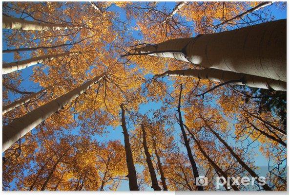 Plakát Vysoké podzimní stromy - Roční období