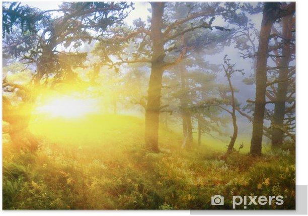 Plakat W mglistym lesie - Lasy