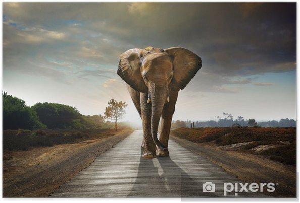 Plakat Walking słonia - Słonie