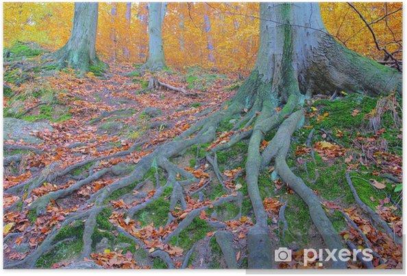 Plakat Wanderweg szlak 10 - Drzewa