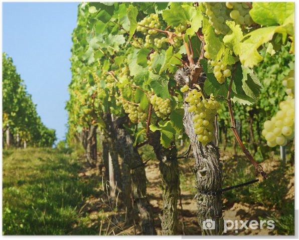 Plakat Weinberg - Winnica - Rolnictwo