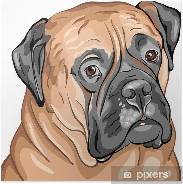Plakat Wektor bliska portret psa rasy bullmastiff - Naklejki na ścianę
