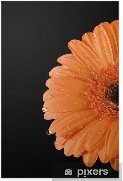 Plakát Wet oranžová Gerbera černém pozadí - Květiny