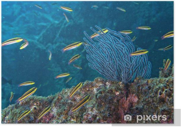 Plakat Wewnątrz szkoły ryb pod wodą - Zwierzęta żyjące pod wodą
