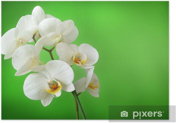 Plakat White Orchid - Kwiaty