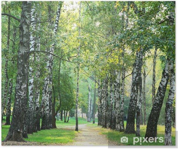 Plakat Wieczór parku słoneczne miasto w pierwszych dniach jesieni - Tematy