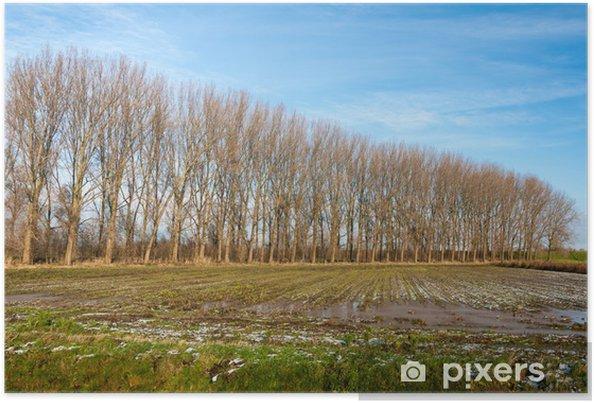 Plakat Wiersz Nagie Drzewa Jesienią