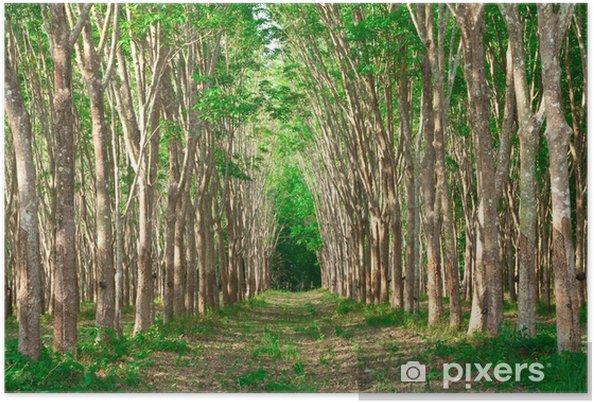 Plakat Wiersze Z Drzewa Kauczukowego Para Tajlandia