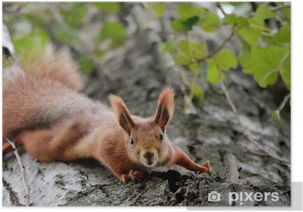 Plakat Wiewiórka na drzewie wygląda zastraszonych - Ssaki