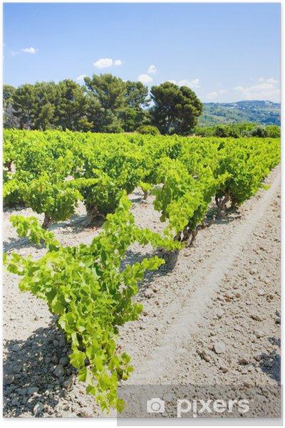 Plakat Winnic w pobliżu Bandol, Provence, Francja - Europa