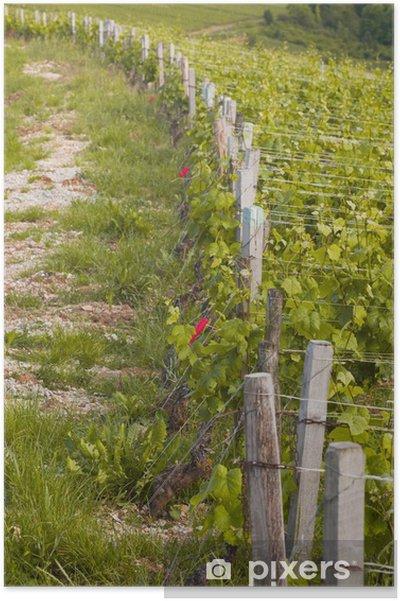 Plakat Winnice w Burgundii - Rolnictwo