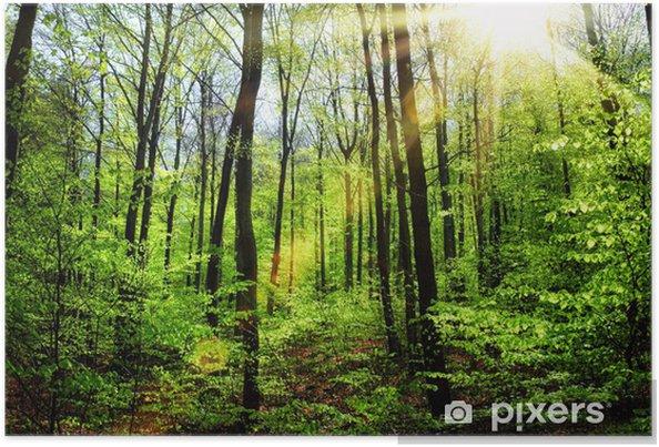 Plakat Wiosenne słońce w lesie bukowym - Przeznaczenia
