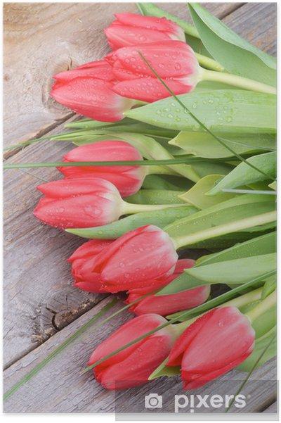 Plakat Wiosenne tulipany - Tematy