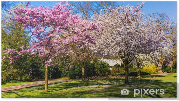 Plakat Wiosną charakter tła. Wiosna krajobraz - Pory roku