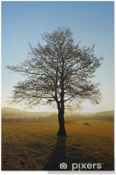 Plakat Wiosna krajobraz z drzewa i słońce - Pory roku