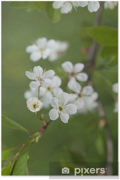 Plakat Wiosna kwitnących jabłoni. - Kwiaty