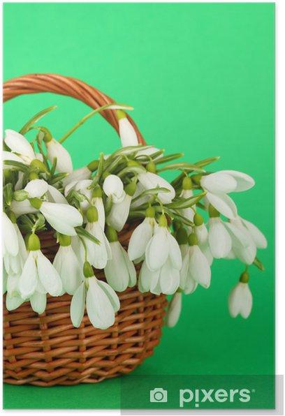Plakat Wiosna przebiśnieg kwiaty w wiklinowym koszu, na kolorowym tle - Kwiaty