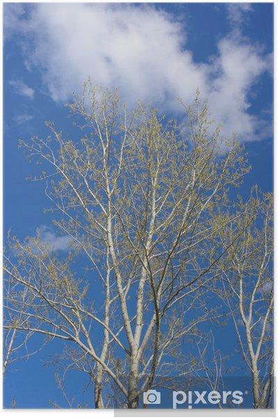 Plakat Wiosna topola - Drzewa