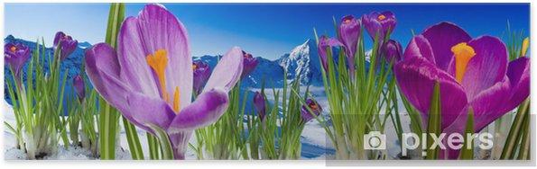 Plakat Wiosna w górach - krokusy kwiaty w śniegu - Panorama