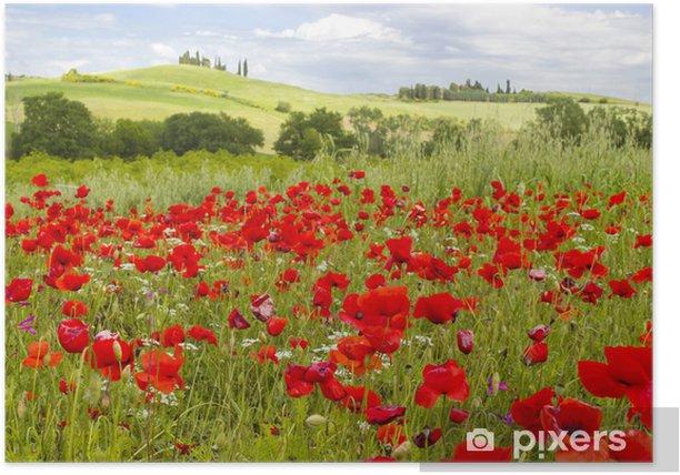 Plakat Wiosna w Toskanii, krajobraz z makami - Tematy