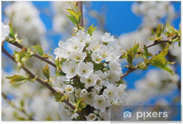 Plakat Wiosna wiśnia - Pory roku