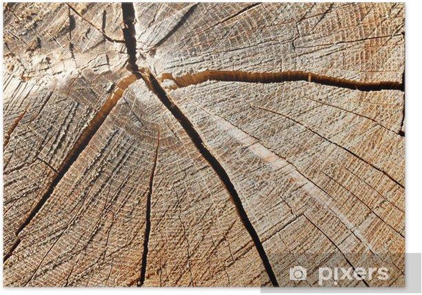 Plakát Wood. Průřez kmene stromu - Ekologie